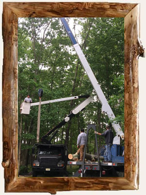 We are Burlington County and Camden County New Jersey's Tree Trimming Experts!